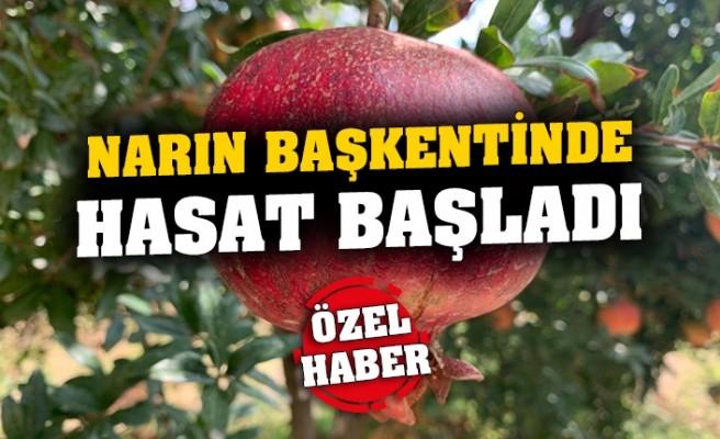 narin_baskentinde_hasat_basladi_h83659_462ad
